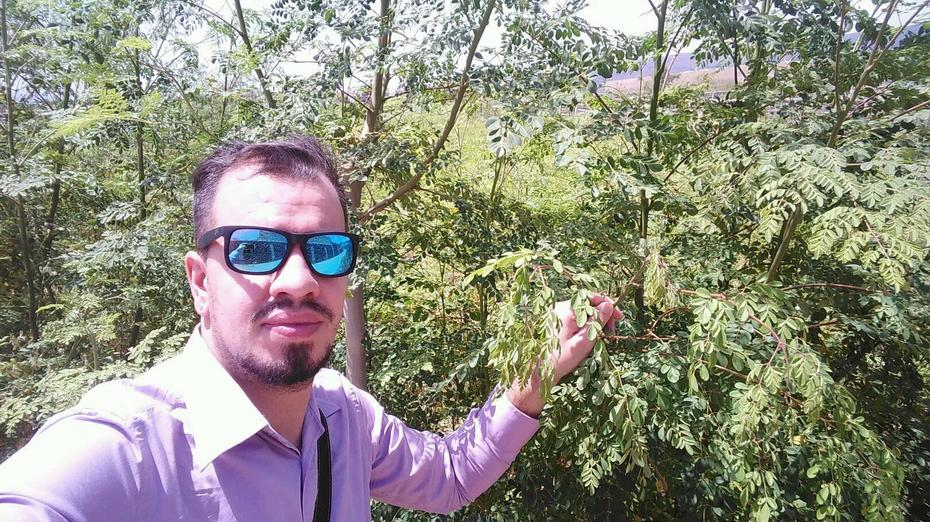 Asesoramiento de Moringa en Tenerife