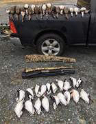 Limit of.duck and 19 turrs