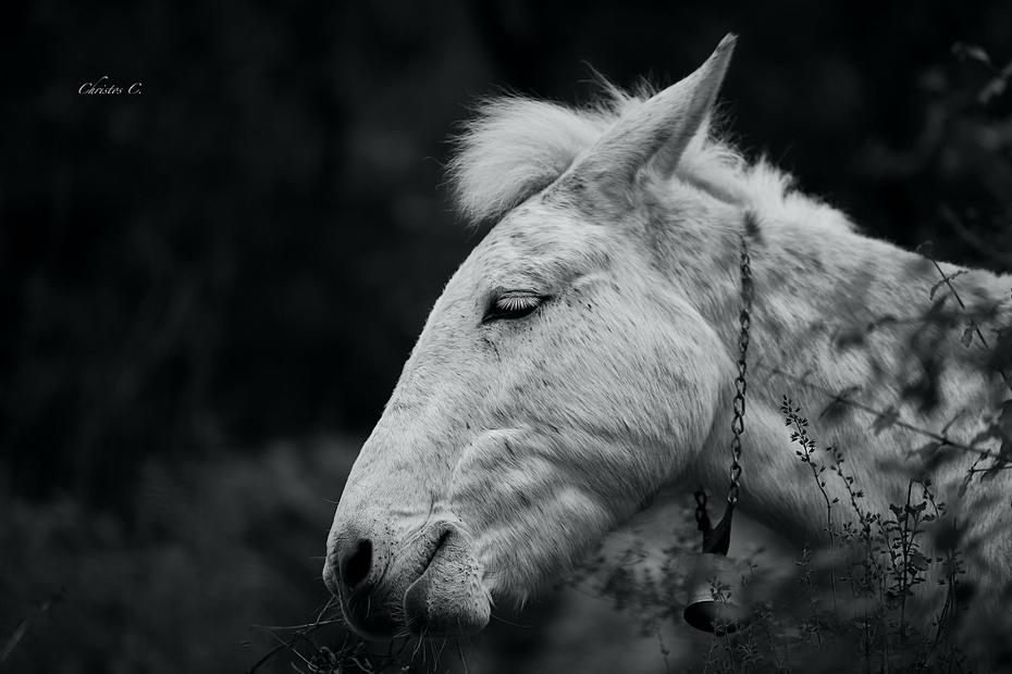 Στο άλογό μου...