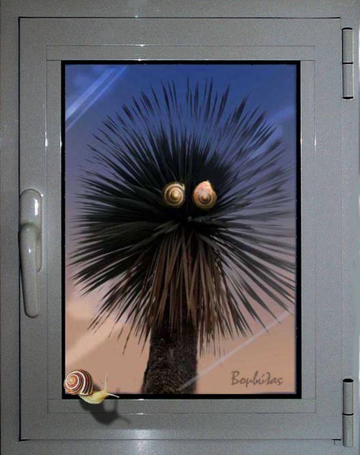 Πρωτοβρόχια με τα σαλιγκάρια  στο παράθυρό μου.