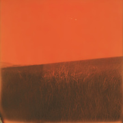 Countryside dyed in orange