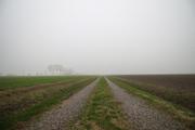 La campagna e la nebbia