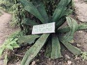 No cortar plantas