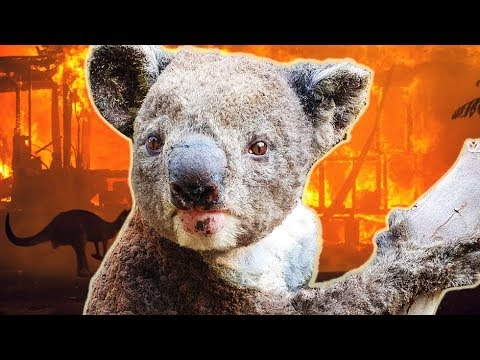The Truth About the Australian Bushfires