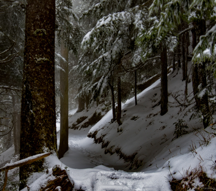 on the way to LeConte, 1-30-2020