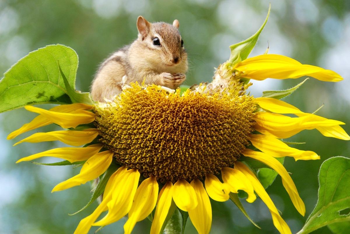 Dies mundials de la Natura i de l'Eficiència Energètica al març!