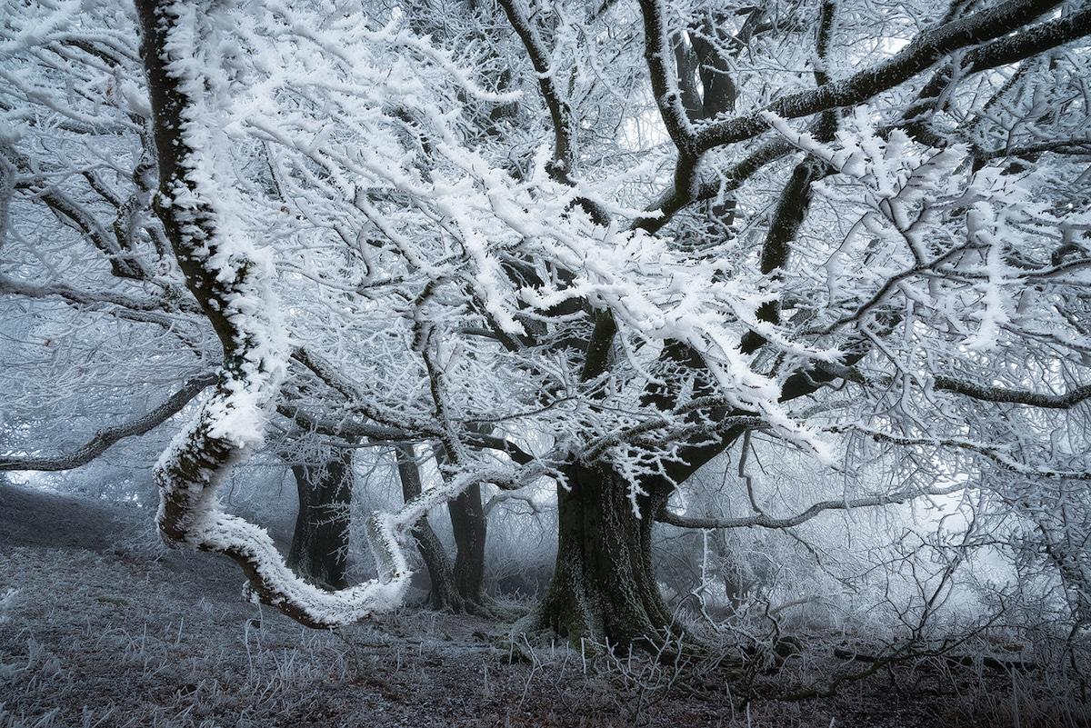ბლოგი, ფოტოგრაფია, ხელოვნება, არტი, ზამთარი, ყინვა, თოვლი, ტყე, პეიზაჟი, ლანდშაფტი, qwellygraphy, blog