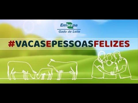 #vacas_e_pessoas_felizes