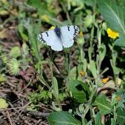 ...Μια πεταλούδα που ξεφεύγει.