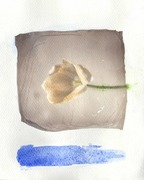 The tulip over the blue