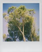 I look up. I see trees.