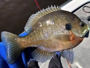 Panfish May 2020