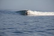 Layback Indian Ocean Longboarder