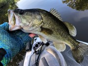 The Bass and Gills Are Shallow Together........