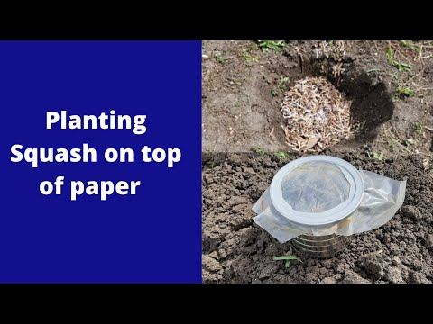 Shredded paper, coffee cans to plant squash