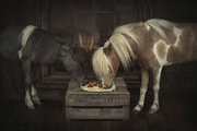 The new version of the lady and the Tramp