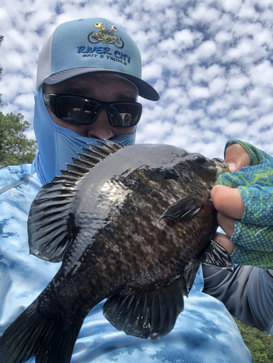 First Gills Of June 2020.......Bluegill Against the Cirrus Clouds...6/2/2020