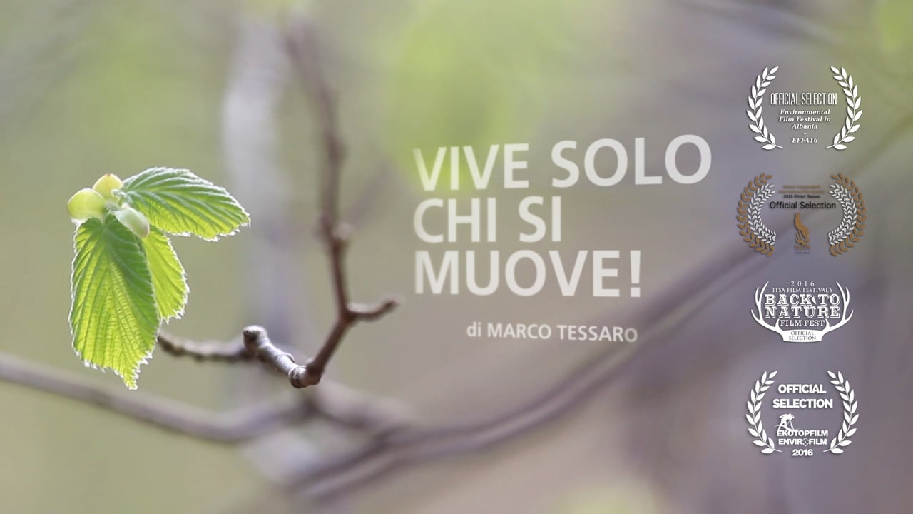 Vive solo chi si muove! (Moving to live!)