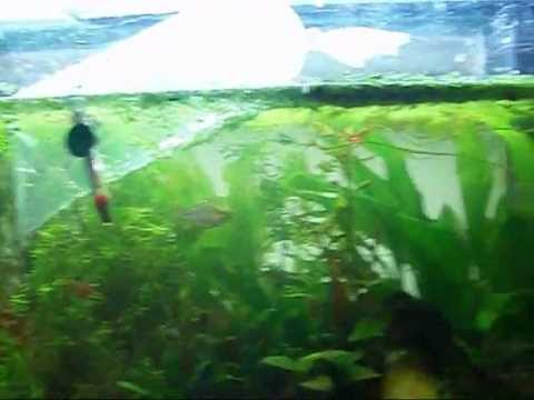 Questions Answered Neon Tetras Enter!!