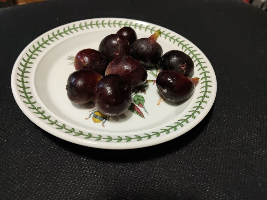 Late Pickings - PICONE BLACK FIG: Ficus carica