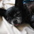william S. Paley