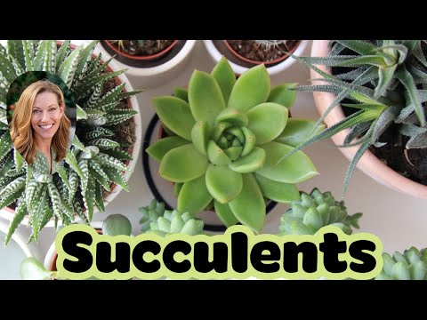 Week 5 - Spring - Succulent Plants and Propagation