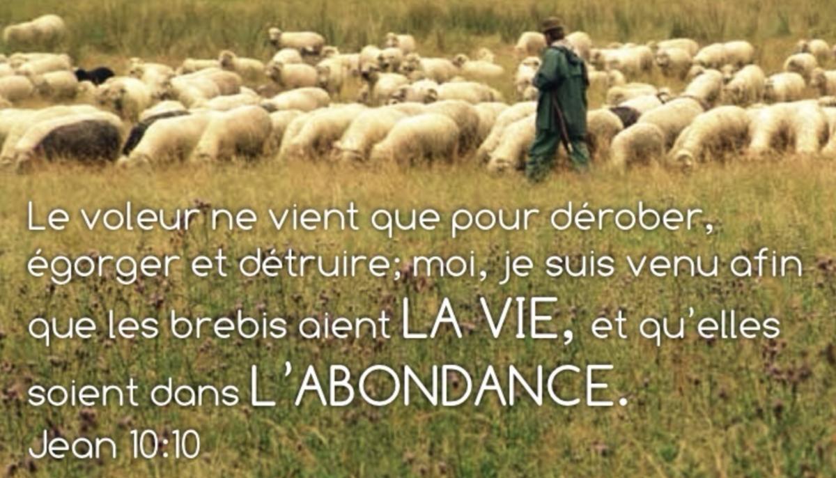 « Je suis venu afin que les brebis aient la vie, et qu'elles soient dans l'abondance » (Jean 10:10)