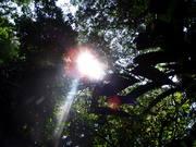 Soleil dans la foret