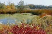 Confluence Pond