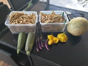 Zuch, squash,eggplant,chilacayote and lots of mada beans
