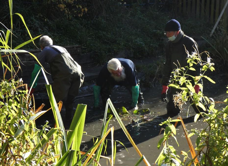 Desilting the pond, Nov 4th '20