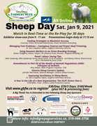 Sheep Day Grey Bruce Farmers Week 2021