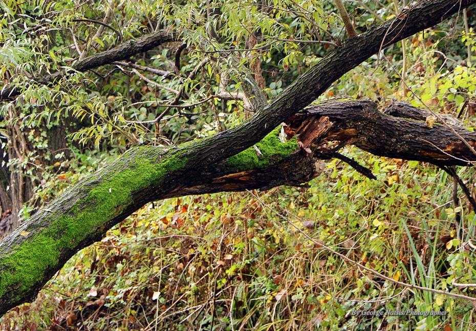 πληγωμένα δέντρα